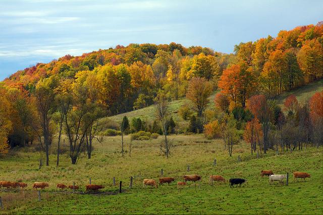 northumberland-county-farm